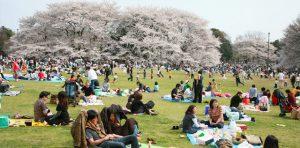 Festival de Primavera cancelado por COVID-19